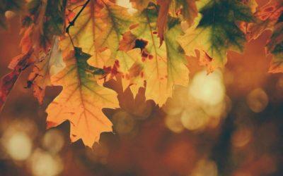 Shiatsu in autunno, 3 buoni motivi per farlo.